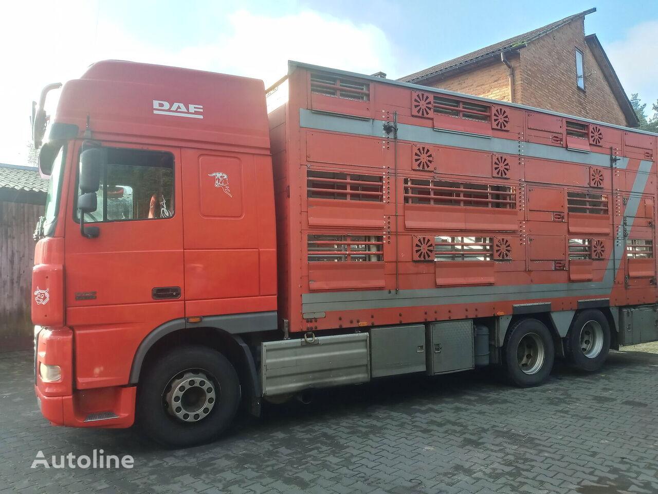 شاحنة نقل المواشي DAF 95 XF